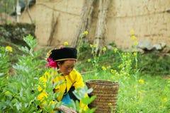Kvinnaarbete för etnisk minoritet Royaltyfri Bild
