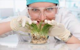Kvinnabiolog med växter Arkivbilder