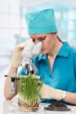 Kvinnabiolog som arbetar med mikroskopet Royaltyfri Bild