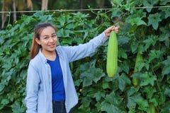 Kvinnabonde i zucchiniväxtträdgården arkivfoton