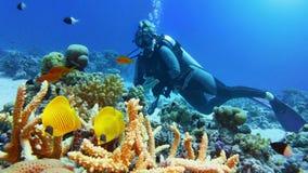 Kvinnadykare och par av den härliga gula korallfisken royaltyfria bilder