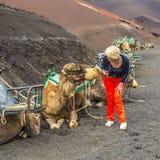 Kvinnaejnjoys som ser till kamel för en kamelritt Royaltyfri Bild