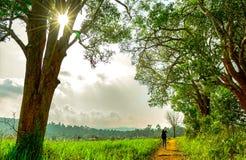 Kvinnafotografen går i landsväg bland fält för grönt gräs och träd i aftonen medan solnedgången Härligt lantligt landskap royaltyfri bild