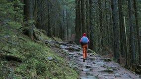 Kvinnafotvandrare med ryggs?cken och att b?ra i r?tt omslag och orange fl?sanden som g?r i skogen i berg arkivfilmer