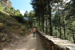 Kvinnafotvandrare som trekking på himalaya berg Arkivfoto