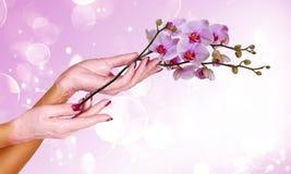 Kvinnahänder   Fotografering för Bildbyråer