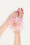 Kvinnahänder med rosa färgblomman Arkivbild