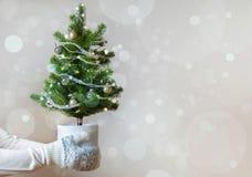 Kvinnahänder med tumvanten som rymmer det dekorerade julträdet, semestrar begrepp arkivbilder