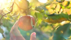Kvinnahacka en Apple stock video