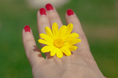 Kvinnahand med den gula blomman Arkivbild