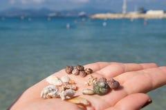 Kvinnahand- och havsshels Royaltyfri Foto