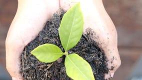 Kvinnahand som lite rymmer den gröna trädväxten