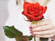 Kvinnahanden som rymmer röd romantiker, steg Royaltyfri Foto