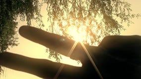 Kvinnahandhandlag som solnedgången i nytt unikt kvalitets- glat folk för träd tänder tätt upp stock video