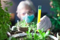 kvinnakemist som experimenterar med kemikalieer och växter som rymmer en provrör royaltyfri foto