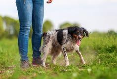 Kvinnalekar med en Brittany hund Royaltyfri Bild