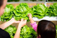 Kvinnan är visa en ung flicka hur man kontrollerar kål på en hydroponic lantgård arkivbild