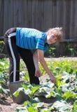 Kvinnan förmultnar jord i grönsaklapp royaltyfri bild