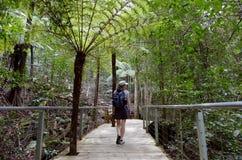 Kvinnan går på en bana i rainforesten av Jamison Valley Blue M royaltyfri foto