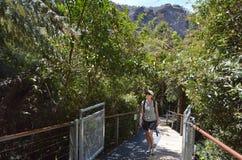 Kvinnan går på en bana i rainforesten av Jamison Valley Blue M royaltyfria foton