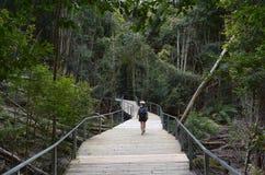 Kvinnan går på en bana i rainforesten av Jamison Valley Blue M arkivfoton