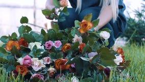 Kvinnan gör en bukett i rosen att arbeta i trädgården arkivfilmer