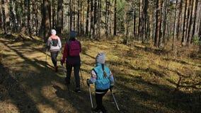 Kvinnan gör nordiskt gå i natur Flickor och barn använder trekking pinnar och nordiska poler, ryggsäckar familjresor arkivfilmer