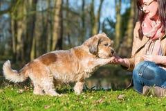 Kvinnan ger hunden en fest och får tafsa arkivfoton