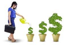 Kvinnan ger omsorg till pengarträden arkivbilder