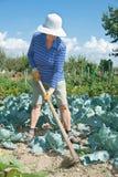 Kvinnan gräver med hoecabbegefältet Royaltyfri Bild
