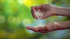 Kvinnan häller handen för att räcka riskorn, ultrarapidhdvideo