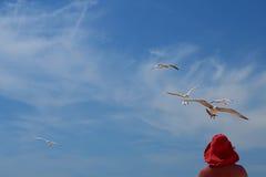 Kvinnan i en röd hatt och fåglar av en seagull Fotografering för Bildbyråer