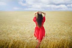 Kvinnan i ett vetefält i en röd lång klänning ser in i avståndet, sikt från baksidan Fotografering för Bildbyråer