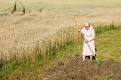 Kvinnan krattar ett hö med en kratta i fältet arkivbilder