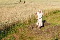 Kvinnan krattar ett hö med en kratta i fältet fotografering för bildbyråer