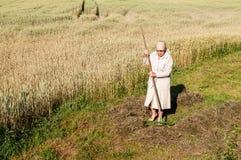 Kvinnan krattar ett hö med en kratta i fältet arkivfoton