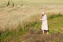 Kvinnan krattar ett hö med en kratta i fältet royaltyfri foto