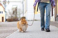 Kvinnan leder hennes hund på en koppel royaltyfri bild