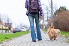 Kvinnan leder hennes hund på en koppel arkivfoton