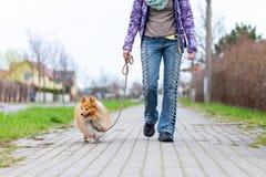Kvinnan leder hennes hund på en koppel arkivbild