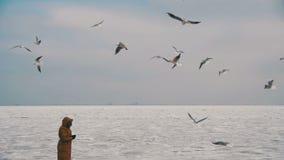 Kvinnan matar de hungriga seagullsna som flyger över det fryste Is-täckte havet långsam rörelse stock video