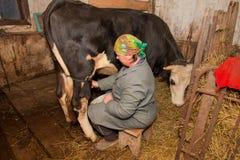 Kvinnan mjölkar en ko i mejeri-lantgård arkivbild