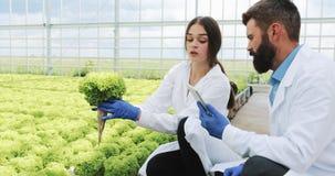 Kvinnan och mannen i laboratoriumämbetsdräkter undersöker försiktigt växter i växthuset arkivfilmer