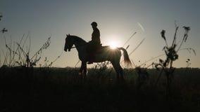 Kvinnan på en kvinnlig ryttare för häst är utomhus på en häst i fältet silhouette långsam rörelse Slapp fokus arkivfilmer