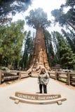 Kvinnan poserar framme av det allmänna Sherman trädet i Kalifornien royaltyfri bild