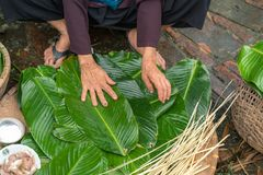 Kvinnan räcker att förbereda sig att göra Chung Cake, den vietnamesiska mån- Tet för det nya året maten Fotografering för Bildbyråer