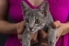 Kvinnan räcker att rymma en kattunge Fotografering för Bildbyråer