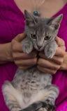 Kvinnan räcker att rymma en kattunge Arkivfoton
