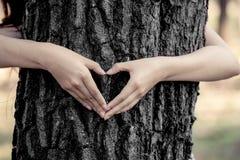 Kvinnan räcker göra en hjärta för att forma runt om ett stort träd Royaltyfri Foto