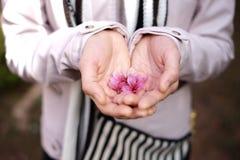 Kvinnan räcker hållande sakura, eller den körsbärsröda blomningen blommar Fotografering för Bildbyråer